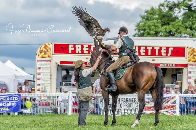 Recycled Racehorse Falconry team