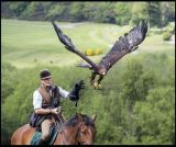 Falconry and horses